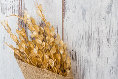 Bouquet of Dried Herbs Stock Image