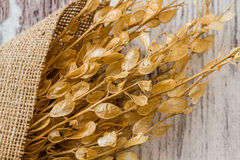 Bouquet of Dried Herbs Royalty Free Stock Photos