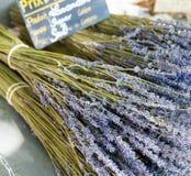 Bouquet of dried Lavandin Stock Image