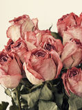 Dried  rose Royalty Free Stock Image