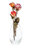 Bouquet of dried roses Stock Photo
