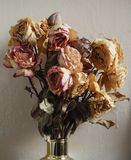 Bouquet of dried roses Royalty Free Stock Photos
