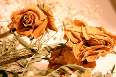 Bouquet of dried roses. Dried roses in a bouquet with great texture on petals Stock Images