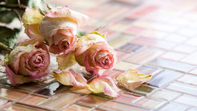 Bouquet of dried roses. Closeup Stock Photography