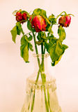 Bouquet of dried roses Royalty Free Stock Photo