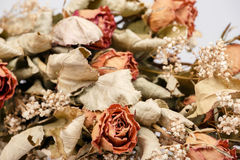 Bouquet of dried roses with leaves Stock Photos