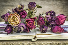Bouquet of dried roses stock images