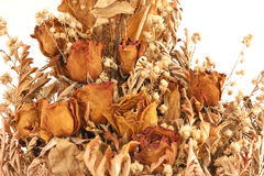 Bouquet of dried withered roses Stock Image