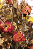 Bouquet of dried withered roses Stock Images