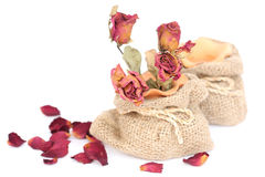 Bouquet of dried withered roses in sackcloth bag on white. Stock Photography