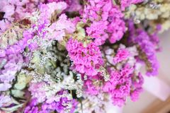 Bouquet of dry flower Royalty Free Stock Photo