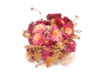 Bouquet of dry flowers Royalty Free Stock Photos