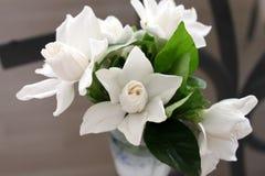 Bouquet du jasmin blanc avec les feuilles vertes sur le fond gris Vue horizontale Photo libre de droits