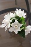 Bouquet du jasmin blanc avec les feuilles vertes sur le fond gris Vue verticale Photos stock