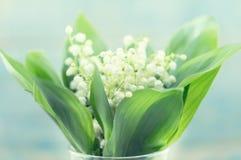 Bouquet du muguet de fleurs sur la table rustique de turquoise Photos stock