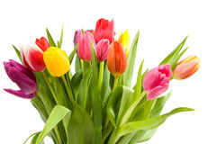 Bouquet of Dutch tulips Royalty Free Stock Photo