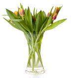 Bouquet of Dutch tulips in vase Royalty Free Stock Images