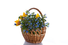 Bouquet of early spring flowers Stock Photo