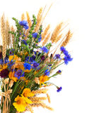 Bouquet from ears and field flowers isolated on white background Stock Photo