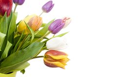 Bouquet Easter tulips Royalty Free Stock Image