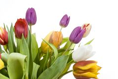 Bouquet Easter tulips as a borde Royalty Free Stock Image
