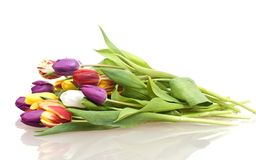 Bouquet Easter tulips as a border Stock Photography