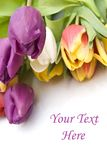 Bouquet Easter tulips as a border Royalty Free Stock Image