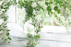 Bouquet from elder branches in a transparent vase against a wind. Still-life from elder branches in a transparent vase against a window Stock Photography