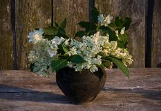 Bouquet of wild flowers. Bouquet of elderberry flowers and mock orange flowers in a black ceramic pot Stock Photos