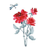 Bouquet of elegant red roses with a gray leaves and dragonfly on a white background. Watercolor. Royalty Free Stock Image