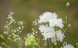 Bouquet estival du nord photographie stock