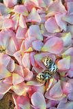 Bouquet et anneau de mariage Photographie stock