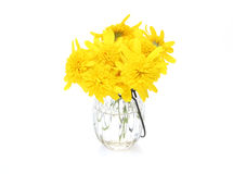 Bouquet of Euryops daisy in a glass vase Royalty Free Stock Images