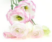 Bouquet of eustoma Royalty Free Stock Photos