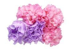 Bouquet of eustoma Royalty Free Stock Photo