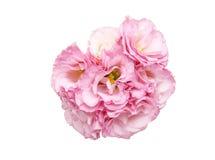 Bouquet of eustoma Stock Photo