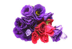 Bouquet of eustoma and rose Royalty Free Stock Image