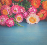 Bouquet of Everlasting flowers Royalty Free Stock Images