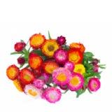 Bouquet of Everlasting flowers Stock Photo