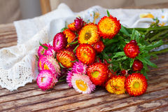 Bouquet of Everlasting flowers on table Royalty Free Stock Images