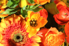 Bouquet of Exotic Flowers Royalty Free Stock Photos