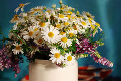 Bouquet of field camomiles. Stock Image