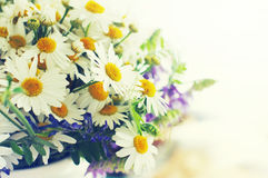 Bouquet of field camomiles. Royalty Free Stock Images