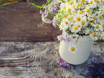 Bouquet of field camomiles in a white jug Royalty Free Stock Image