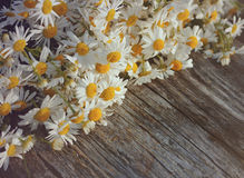 Bouquet of field camomiles on a wooden background. Stock Images