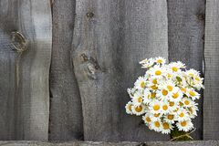 Bouquet field chamomile flowers in fence on old wooden background. Concept rustic romantic surprise. Copy space Minimal style,. Bouquet field chamomile flowers stock image
