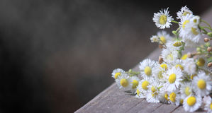 Bouquet of field chamomiles on old wooden table against black background with beams of light and floating dust Stock Photos