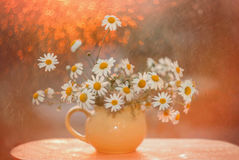 Bouquet of field daisies on the window in the light of the setting sun. On the window is a bunch of wild daisies. Outside the window the sunset and beautiful royalty free stock image