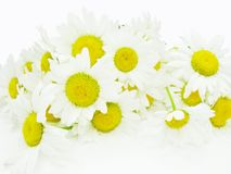 Bouquet of field daisy flowers Royalty Free Stock Images