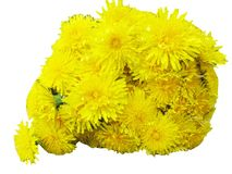 Bouquet of field dandelion flowers Stock Photo